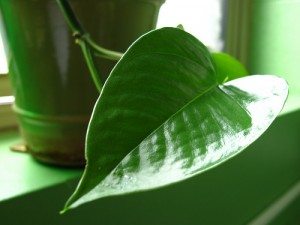 Improving the Air Quality in Your Office with Plants